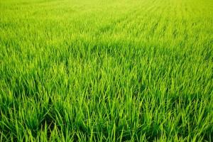 農作業、田植までのお手伝い急募!<氷見市>
